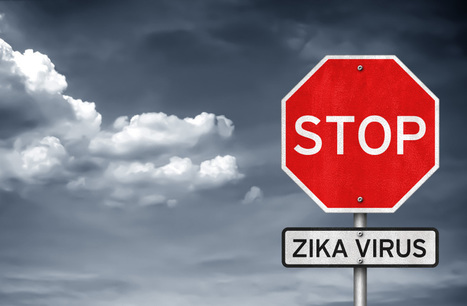 How Zika Virus is Affecting Today's Flight Attendant Careers - Canadian Tourism College | Resources for students | Scoop.it