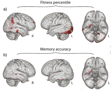 Importance of physical activity and aerobic exercise for healthy brain function   KurzweilAI   Accelerating technology   Scoop.it