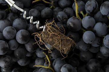Pourquoi nous nous sommes engagés sur la voie des vins bio - Château Grand Français | Nourrir l'humanite | Scoop.it