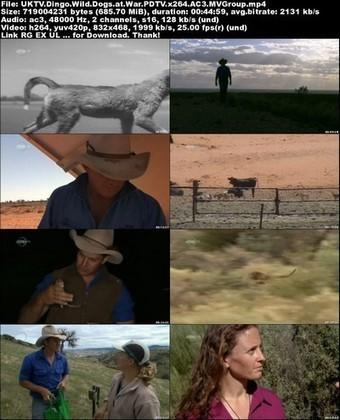 UKTV - Dingo: Wild Dogs at War (2012) PDTV x264 AC3-MVGroup ...   AgainstFeralDogs   Scoop.it