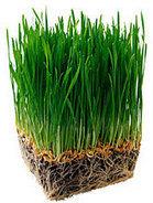Wheatgrass Juicer | Juicers NZ | Scoop.it
