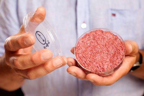 A Lab-Grown Burger Gets a Taste Test | Article of the Week | Scoop.it