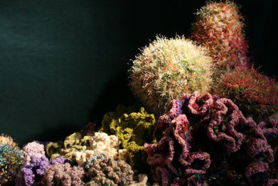 Crochet Coral Reef Project | For Art's Sake-1 | Scoop.it