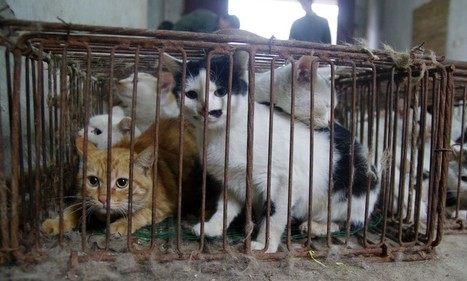 Caught: A cat slaughter house that killed and skinned strays | Nature Animals humankind | Scoop.it