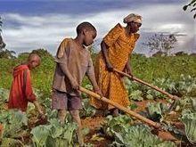 Quelles voies choisir pour une intensification durable de l'agriculture | Questions de développement ... | Scoop.it