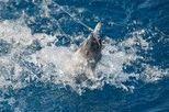 Claves de la situación crítica del atún rojo [Pag. 1 de 3] | EROSKI CONSUMER | Agua | Scoop.it