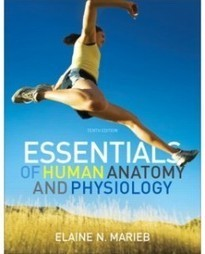 Test Bank For » Test Bank for Essentials of Human Anatomy & Physiology, 10th Edition: Elaine N. Marieb Download | Anatomy & Physiology Test Bank | Scoop.it