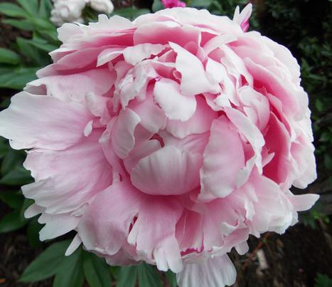 The Graceful Gardener   Annie Haven   Haven Brand   Scoop.it