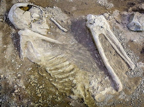 7,500 year old burial found in Iran | Archaeology News Network | Centro de Estudios Artísticos Elba | Scoop.it