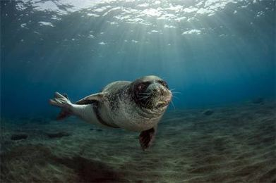Fotógrafo registra animais em extinção - Tribuna da Bahia - Tribuna da Bahia   No Mundo das Fábulas   Scoop.it