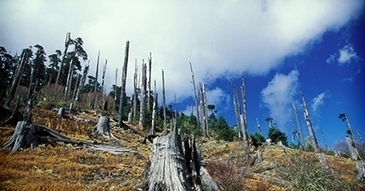 FSC Forest Stewardship Council ® · Wednesday, 08. October 2014 - Forest management isn't always clear cut | Forests | Scoop.it