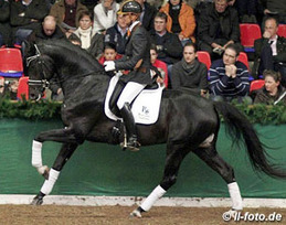 Cracked Hoof Prevents Celebrity Euro Warmblood Stallion Jack Sparrow from Breed Performance Test; Foals Will Be Unregistered  via eurodressage | Horse And Rider World | Scoop.it
