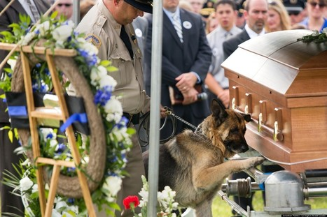 PHOTO: Police Dog Bids Farewell To His Fallen Partner | Hot off the Net | Scoop.it