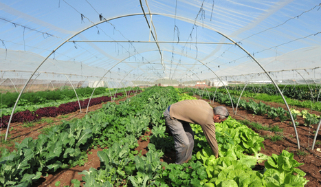 Organic Nearly as Productive as Industrial Farming, New Study Says   Civil Eats   Plant Based Transitions   Scoop.it