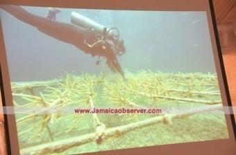 Coral nursery success - Environment   GMOs & FOOD, WATER & SOIL MATTERS   Scoop.it
