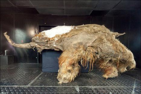 Hallan dos cachorros de león cavernario de 10.000 años de antigüedad en Yakutia (Rusia) | Arqueología, Historia Antigua y Medieval - Archeology, Ancient and Medieval History byTerrae Antiqvae (Grupos) | Scoop.it