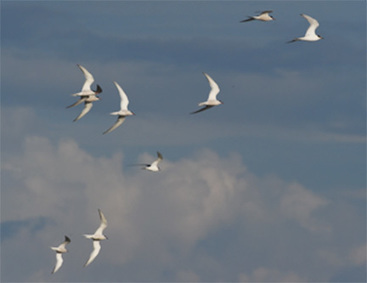 Birds fly faster in large flocks | World Environment Nature News | Scoop.it