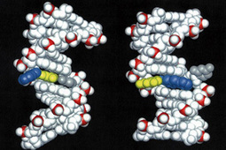 Causes of Cancer Likely Found in 'Junk' DNA ... - Singularity Hub | Futuretronium Book | Scoop.it