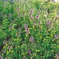 Bulk Packing - Herb Seeds, Herb seeds online, Buy seeds online india | Buy flower seeds online, Flower seeds online, Garden seeds, Flower seeds, Herb seeds | Scoop.it