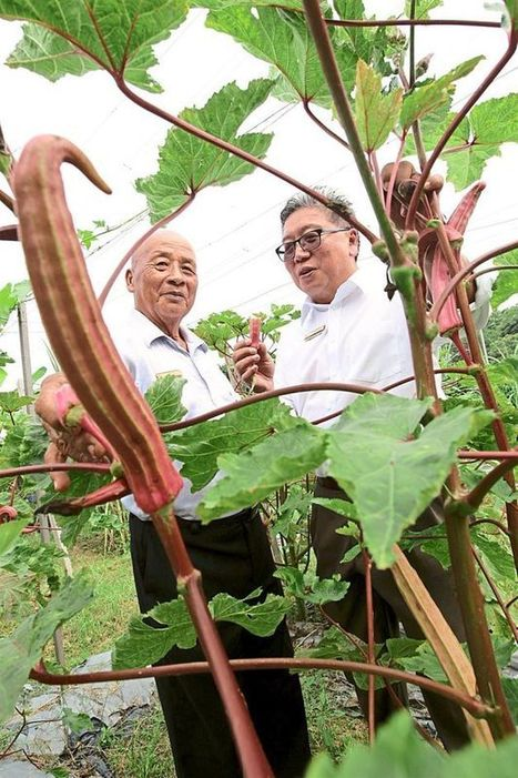 Property developer embarks on organic farming within its housing estate - SME | The Star Online | Right Livelihood: Growing Food | Scoop.it