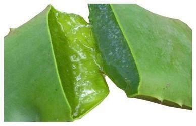 Aloe Arborescens : virtu' e proprietà di questo fantastico prodotto naturale   CurarsiAlNaturale.it   Ambiente   Scoop.it