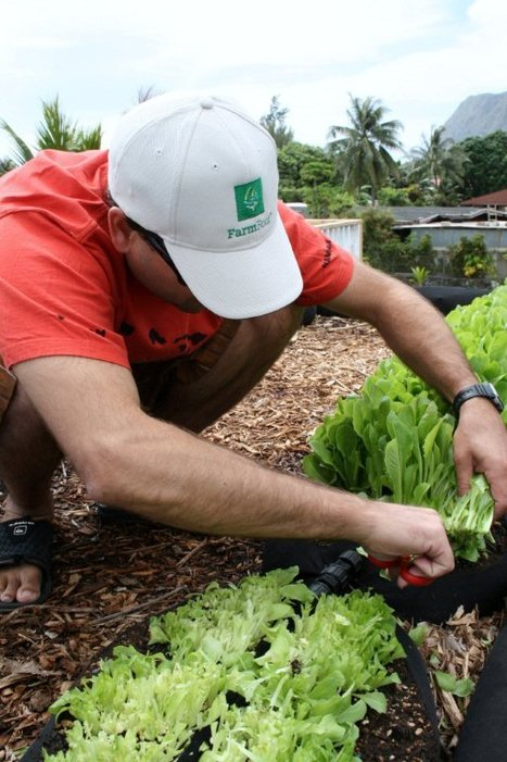 Detroit's Good Food Cure | Sustainable Urban Agriculture | Scoop.it