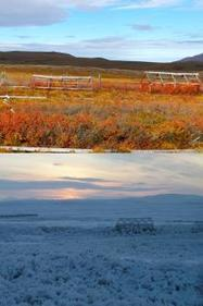 """Research into Carbon Storage in Arctic Tundra Reveals Unexpected Insight into Ecosystem Resiliency "" - UC Santa Barbara News Release 
