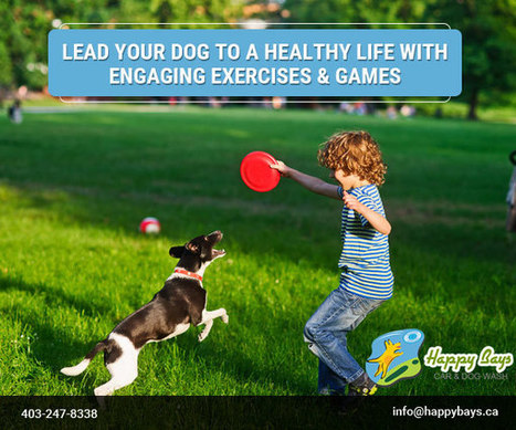 Lead Your Dog to a Healthy Life with Engaging Exercises & Games | Know about Your Car Wash Services in Calgary from Happy Bays | Scoop.it