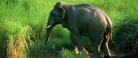 Online Jeep Safari Booking To Explore Dudhwa National Park | Local SEO Company | Scoop.it