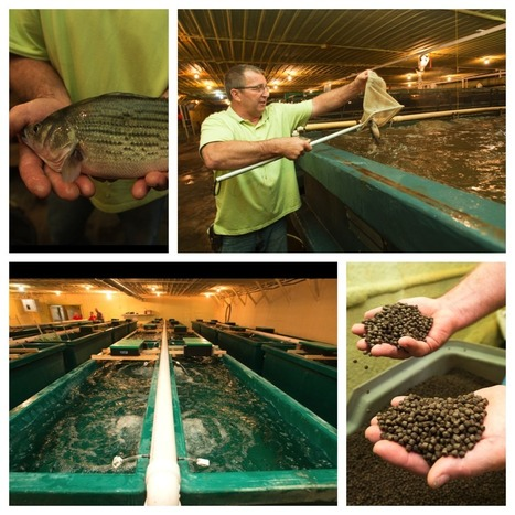Central Iowa farmers dive into aquaculture | | Mina Tani Semesta | Scoop.it