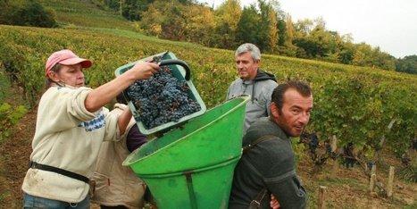 Saint-Émilionnais : ultimes coups de sécateur | My wine, heritage and communication press review | Scoop.it