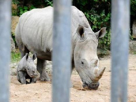 Assam to compile database of rhino horns - Times of India | Oceans and Wildlife | Scoop.it