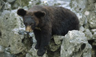 Teaching the bear necessities of animal welfare | Animals R Us | Scoop.it