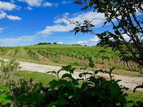Les vins aux cépages atlantiques et méditerranéens | Le Vin et + encore | Scoop.it