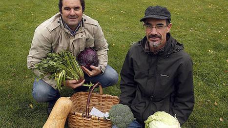Lechugas y cebollas para los jardines de Sarriguren   Ordenación del Territorio   Scoop.it