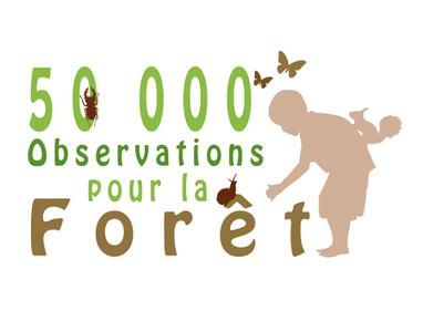 La Lettre d'infos n°11 : Encore un mois pour observer la forêt   Mes passions natures   Scoop.it