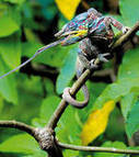 Photos - Les plus belles photos de nature du concours Oasis Photocontest 2011 | Esprit libre | Scoop.it