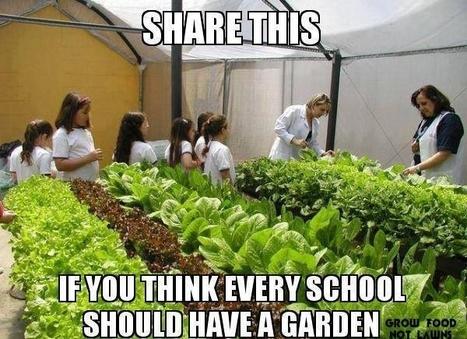 Grow Food, Not Lawns | Missing Link Projects Groen & Duurzaamheid | Scoop.it