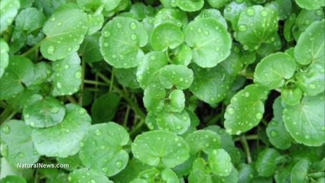 Six edible plants that will help you survive in the wild | plantas comestibles silvestres | Scoop.it