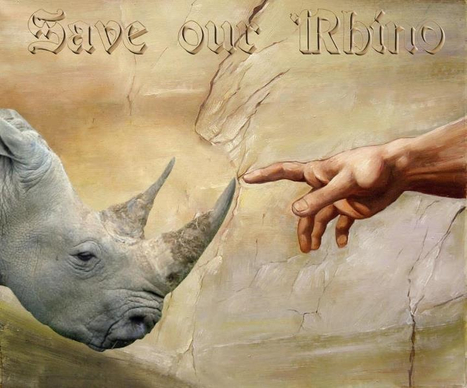 Save our rhino | What's Happening to Africa's Rhino? | Scoop.it
