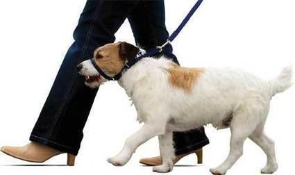 ¿Como hago para que mi perro no tire de la correa? : TiendAnimal   Perros   Scoop.it