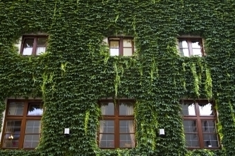 Les toitures végétalisées en France - vos économies d'énergie.fr | Développement durable | Scoop.it