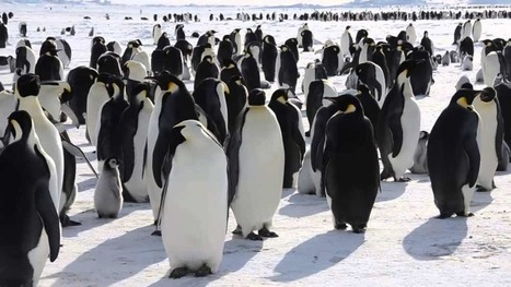 At #Antarctica, 150,000 #Penguin died as victims of the #climate change - Port St. Lucie Tech Time   Messenger for mother Earth   Scoop.it