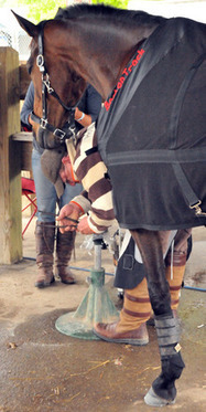 A Happy New Year of Laminitis Research by AHF | Laminitis News | Scoop.it