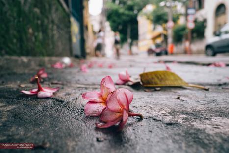 A week in Cidade Maravilhosa, the Marvelous City of Rio de Janeiro | Adrian Seah | Life in Brazil | Scoop.it