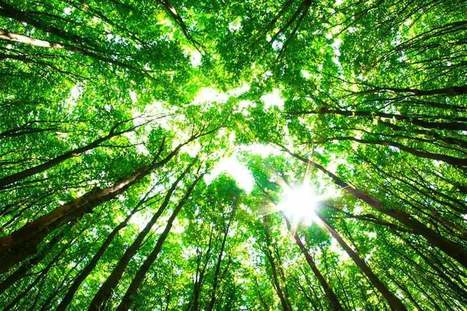 UP Magazine - Ces drones vont planter 1 milliard d'arbres par an | PROSPECTIVE DESIGN | Scoop.it