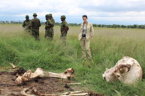 Nadya Hutagalung focuses on the tusk at hand | The Fight for Elephant & Rhino Survival | Scoop.it