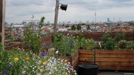 Sponge City: Berlin plans for a hotter climate | Environment | DW.COM | 22.07.2016 | Dans l'actu | Doc' ESTP | Scoop.it