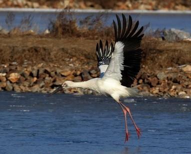 Chine:deuxièmecasdemortd'oiseauxrares | Toxique, soyons vigilant ! | Scoop.it