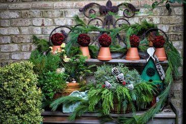 Merry Christmas! - Fine Gardening   Annie Haven   Haven Brand   Scoop.it